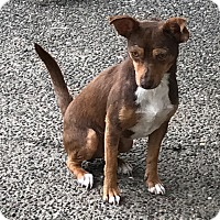 Adopt A Pet :: Bandit - Auburn, WA
