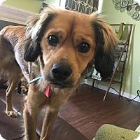 Adopt A Pet :: Slater - Athens, GA