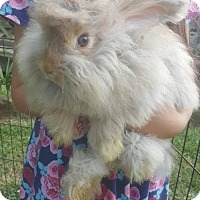 Angora, English for adoption in Trenton, New Jersey - Fred