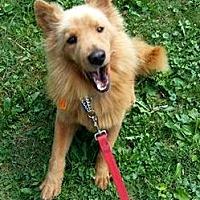 Adopt A Pet :: SHILOH - Elyria, OH