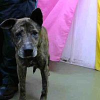 Adopt A Pet :: URGENT 8/17 @ DEVORE - San Bernardino, CA