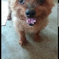 Adopt A Pet :: Sid - Oakton, VA