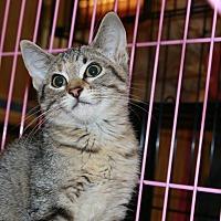 Adopt A Pet :: Sofie - Rochester, MN