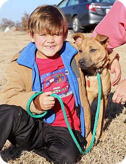 Basenji Mix Dog for adoption in Stamford, Connecticut - ISABELLE - sweet, loving, frie