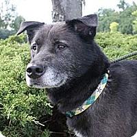 Adopt A Pet :: Stack - Rockaway, NJ