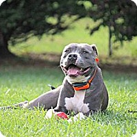 Adopt A Pet :: Chico *Professionally Trained* - Roaring Spring, PA
