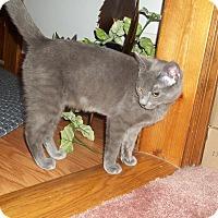 Adopt A Pet :: Wendy - Acme, PA