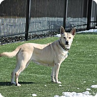 Adopt A Pet :: Sally Needs a Foster Family! - Quentin, PA