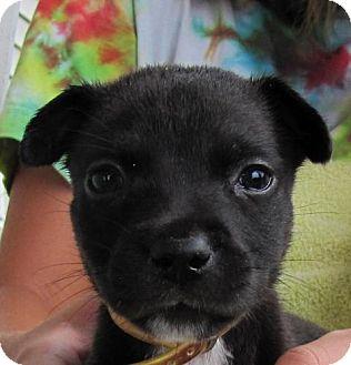 Terrier (Unknown Type, Medium) Mix Puppy for adoption in Port St. Joe, Florida - Smoochy