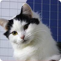 Adopt A Pet :: Panda - Mission, BC