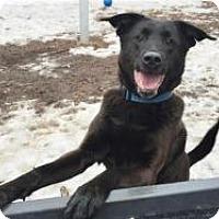 Adopt A Pet :: Hudson - Briarcliff Manor, NY