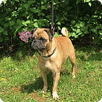 Adopt A Pet :: Tasha - New Oxford, PA
