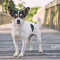 Adopt A Pet :: Songbird - Webster, TX