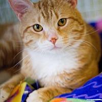 Adopt A Pet :: Chadwick - Grayslake, IL