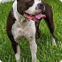 Adopt A Pet :: Prince * - Miami, FL
