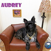 Adopt A Pet :: Audrey - Arcadia, FL