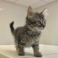Adopt A Pet :: Julia - Denver, CO