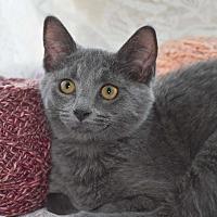 Adopt A Pet :: Ashley - Bristol, CT