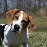 Adopt A Pet :: Bessie - Westampton, NJ