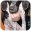 Photo 3 - Pointer Mix Puppy for adoption in North Judson, Indiana - Faith