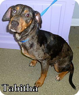 Catahoula Leopard Dog Mix Dog for adoption in Georgetown, South Carolina - Tabitha