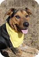 Shepherd (Unknown Type)/Shepherd (Unknown Type) Mix Dog for adoption in Kimberton, Pennsylvania - Mayer