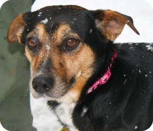 Terrier (Unknown Type, Small) Mix Dog for adoption in Brooklyn, New York - Bella