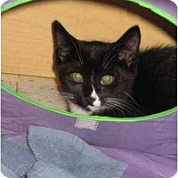 Adopt A Pet :: Paul - Jenkintown, PA