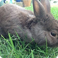 Adopt A Pet :: Coconut - Maple Shade, NJ