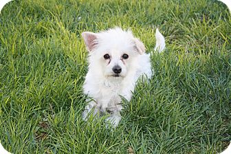 Terrier (Unknown Type, Small) Mix Dog for adoption in California City, California - Earl