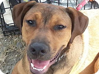 Hound (Unknown Type) Mix Puppy for adoption in Pompton Lakes, New Jersey - Drake