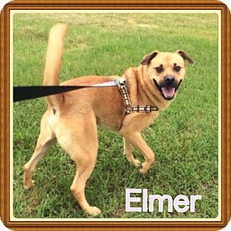 Beagle/Labrador Retriever Mix Dog for adoption in Cranford, New Jersey - Elmer