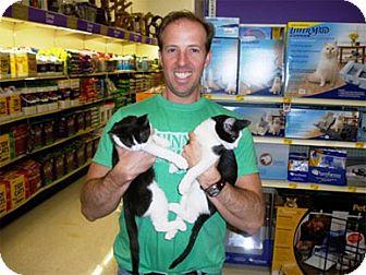 Domestic Mediumhair Kitten for adoption in Garland, Texas - Camille
