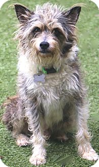 Terrier (Unknown Type, Small) Mix Dog for adoption in Allentown, Pennsylvania - Sterling