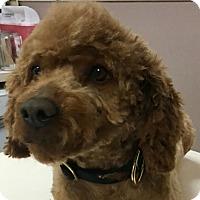 Adopt A Pet :: Quentin - Las Vegas, NV