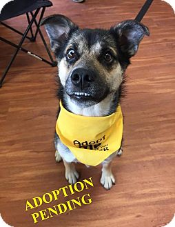 German Shepherd Dog Mix Dog for adoption in Winnipeg, Manitoba - KEEVA