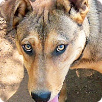 Adopt A Pet :: Alice - Poway, CA
