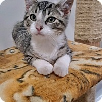 Adopt A Pet :: Toby - Ashland, OH