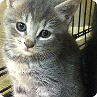 Adopt A Pet :: Monterey - East Brunswick, NJ