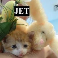 Adopt A Pet :: JET - Franklin, NC