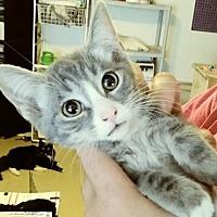 Adopt A Pet :: Jayco - San Tan Valley, AZ