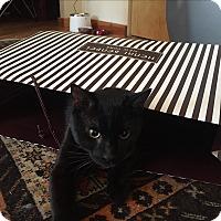 Adopt A Pet :: Felix Ramon Vanderbilt - Chicago, IL