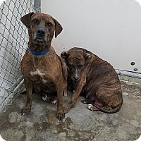 Adopt A Pet :: Sky - California City, CA