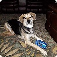 Adopt A Pet :: ZCL Rex - Horn Lake, MS