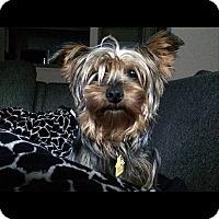 Adopt A Pet :: Tiggy - Alpharetta, GA