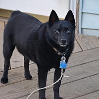 Adopt A Pet :: Spanky - East Randolph, VT