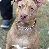 Adopt A Pet :: Java - Tinton Falls, NJ