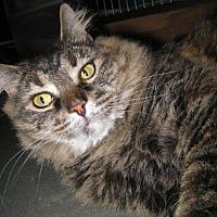Adopt A Pet :: Loretta - Capshaw, AL
