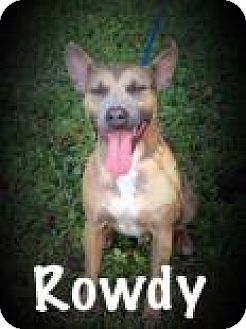 American Pit Bull Terrier Mix Dog for adoption in Middleburg, Florida - Rowdy