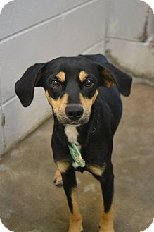 Terrier (Unknown Type, Small) Mix Dog for adoption in Beaumont, Texas - Drew